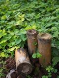 Bambusowa tubka, bambusowa sekcja Zdjęcie Royalty Free