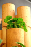 bambusowa waza Obrazy Royalty Free