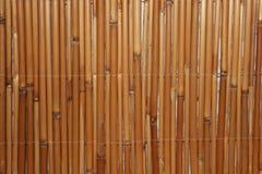 Bambusowe kończyny z rzędu fotografia royalty free