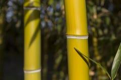 Bambusowe płochy Fotografia Stock