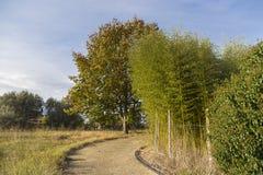 Bambusowe płochy Zdjęcia Royalty Free
