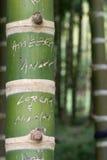 bambusowi imiona Zdjęcie Stock