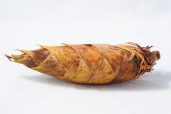 Bambusowi krótkopędy Zdjęcie Stock