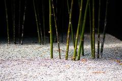 Bambusowi krótkopędy w Zen ogródzie zdjęcia stock