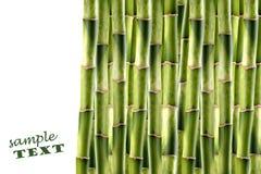 bambusowi krótkopędy Fotografia Stock