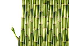 bambusowi krótkopędy Obrazy Stock