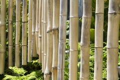 Bambusowi kuranty obraz royalty free