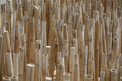 bambusowi naturalni drzewa Zdjęcia Royalty Free