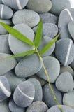 bambusowi urlopu kamienie Zdjęcia Royalty Free