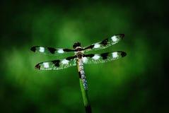 bambusowy dragonfly Fotografia Stock