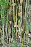 Bambusowy drzewo Fotografia Stock
