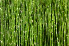 bambusowy gaj Obraz Royalty Free