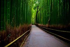Bambusowy gaj Zdjęcia Stock