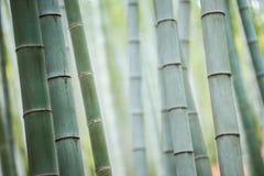 Bambusowy gaj, bambusowy las Zdjęcia Royalty Free