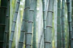 Bambusowy gaj, bambusowy las Zdjęcie Royalty Free