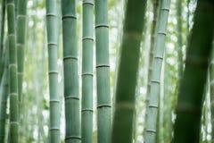 Bambusowy gaj, bambusowy las Obrazy Stock