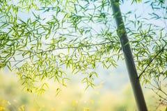 Bambusowy gaj, bambusowy las Zdjęcie Stock