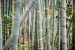 Bambusowy gaj, bambusowy las Fotografia Royalty Free