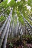 Bambusowy gaj, bambusowy las przy Arashiyama Zdjęcie Stock