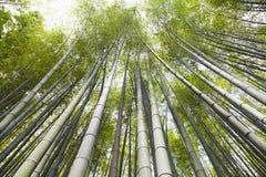 Bambusowy gaj, bambusowy las przy Arashiyama, Kyoto, Japonia Zdjęcie Stock