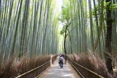 Bambusowy gaj, bambusowy las przy Arashiyama, Kyoto, Japonia Fotografia Stock