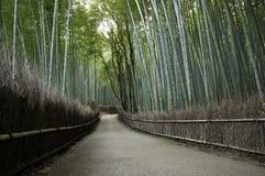 Bambusowy gaj w Arashiyama w Kyoto, Japonia Fotografia Royalty Free
