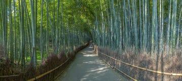 Bambusowy gaj w Kyoto Obraz Royalty Free