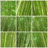 bambusowy kolaż dziewięć fotografii Obrazy Royalty Free