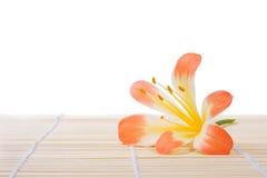 bambusowy kwiat Obraz Royalty Free