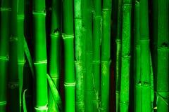 Bambusowy las Fotografia Stock