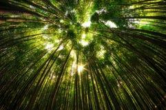 Bambusowy las w Damyang fotografia royalty free
