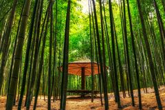 Bambusowy las w Damyang zdjęcia stock