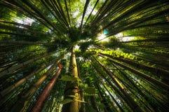 Bambusowy las w Damyang obraz stock