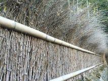 Bambusowy las wzdłuż kraj strony zdjęcie stock