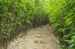 Bambusowy las z Footpath obraz stock