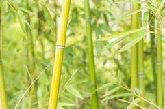 Bambusowy las zdala od miasta Zdjęcia Royalty Free