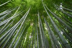 bambusowy lasowy Kyoto zdjęcia stock