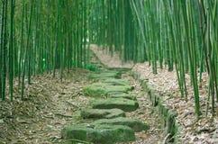 bambusowy lasowy ślad Obraz Stock