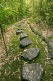 bambusowy lasowy ślad Obrazy Stock