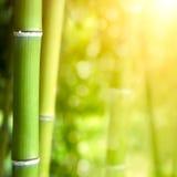 Bambusowy lasowy tło Obrazy Stock