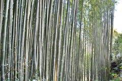 Bambusowy lasu Sa Pa Wietnam Zdjęcia Stock
