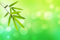Bambusowy liść i zieleni natura zaświecamy bokeh tło Fotografia Stock