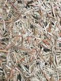 Bambusowy liść jako tło Zdjęcia Stock
