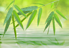bambusowy liść nad ducha wody zen Zdjęcia Royalty Free