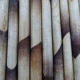bambusowy natury tło Obraz Stock