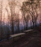 Bambusowy nieboszczyk i świt zdjęcia stock