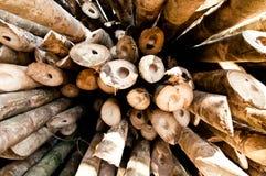 bambusowy prącie Obraz Royalty Free