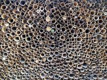 Bambusowy przekrój poprzeczny obraz stock