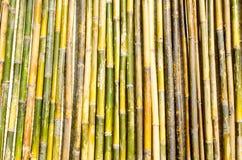 Bambusowy słupa ogrodzenie Zdjęcia Stock