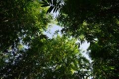 Bambusowy sylwetka wzór i podcieniowanie, światło słoneczne od bambusowego liścia ziemia fotografia stock